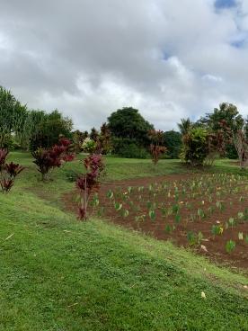 Kauai Plantation 4